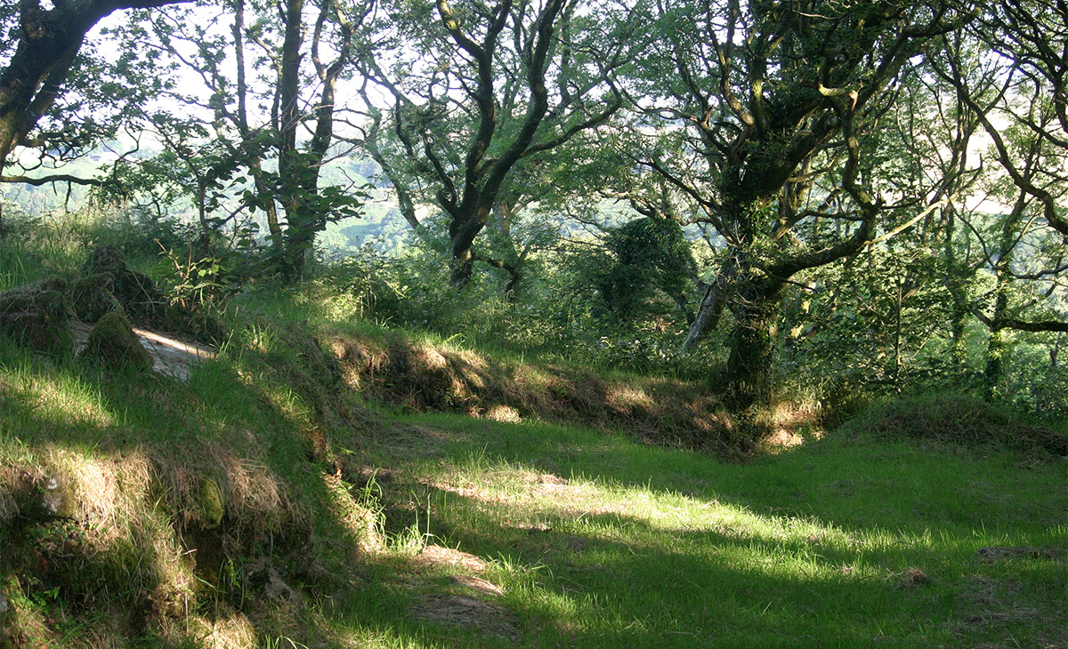 Beautiful view of a forest setting, with grass and trees, near Tregynon